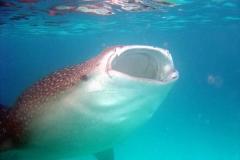 maldives vero req bal retouche