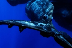 que baleine